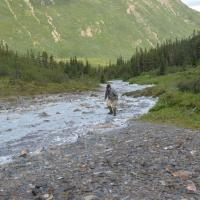 geologist walking in stream with white precipitate