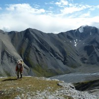 "In foreground is male geologist walking toward us with head down, hat on, hammer dangling from hand, pack on back, ""surveyor's"" vest. Ground drops away behind him to braided river far below, dark mountains of subvertical strata beyond river."